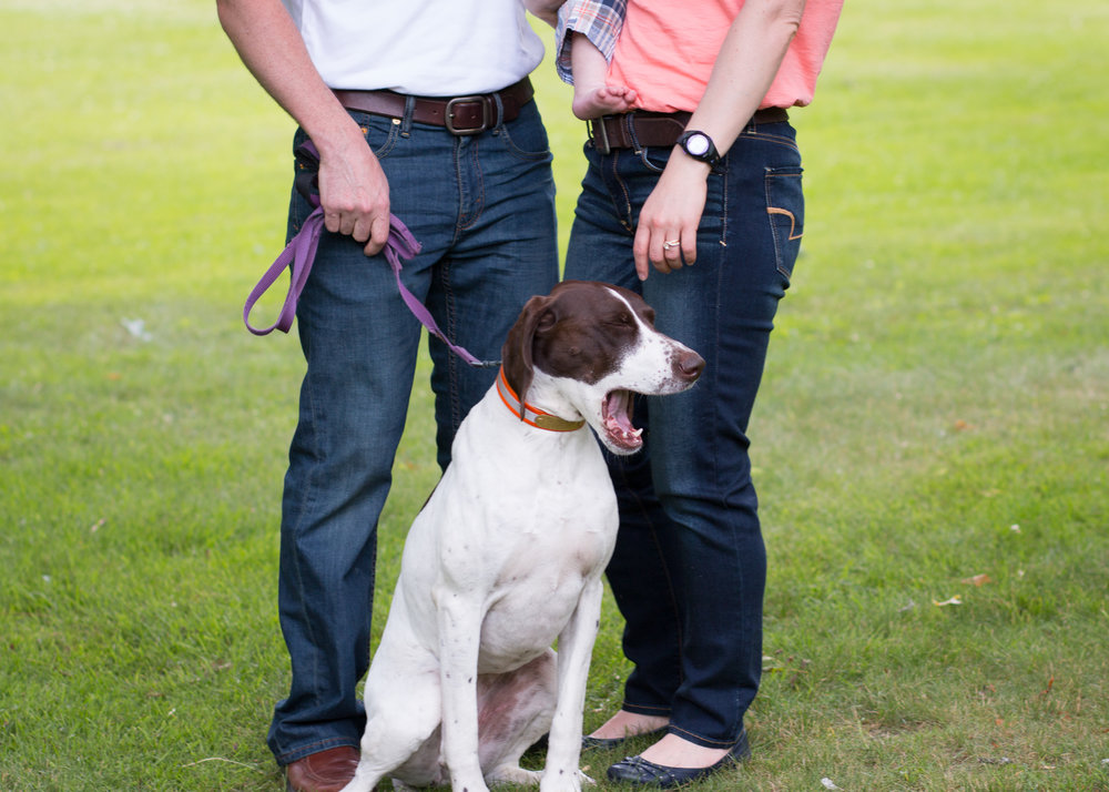 brown and white dog hangs out with her family during a family photo shoot!