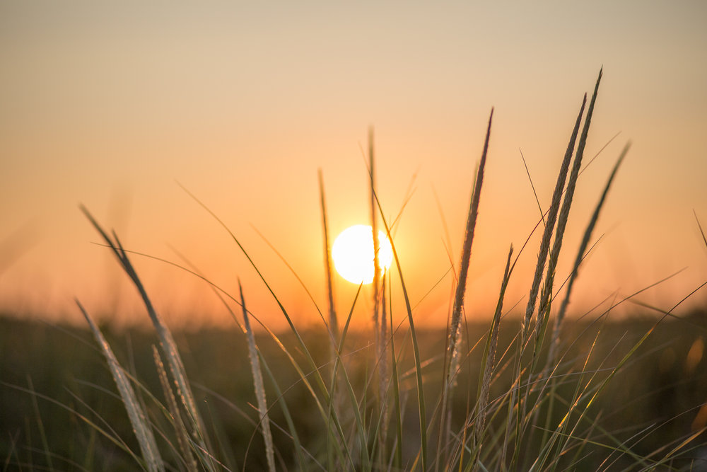 Newburyport Sunrise Through Reeds
