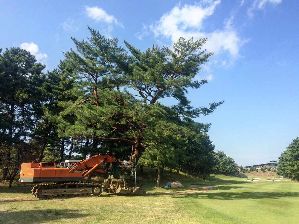 No. 18 - Tree Relocation