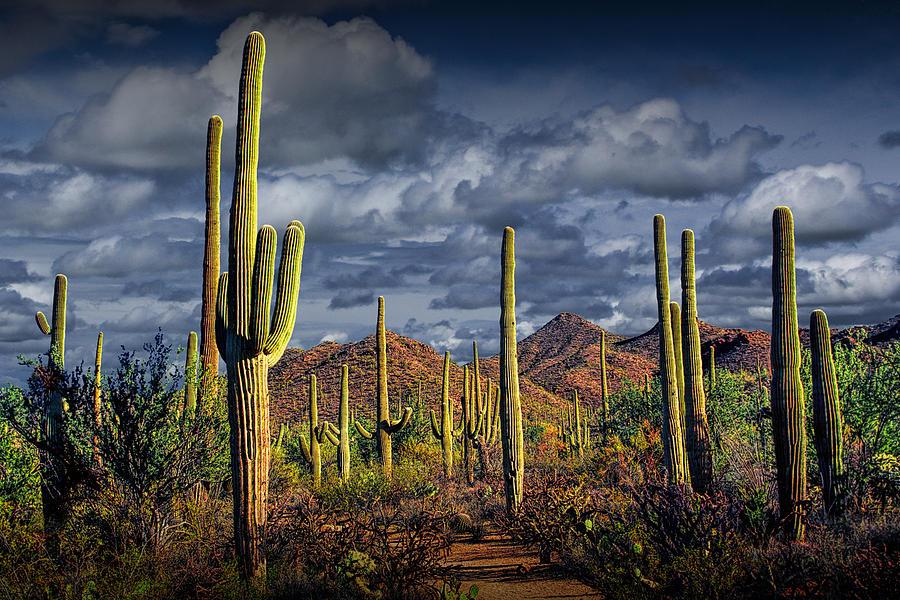 saguaro-cactus-forest-near-tucson-arizona-randall-nyhof.jpg