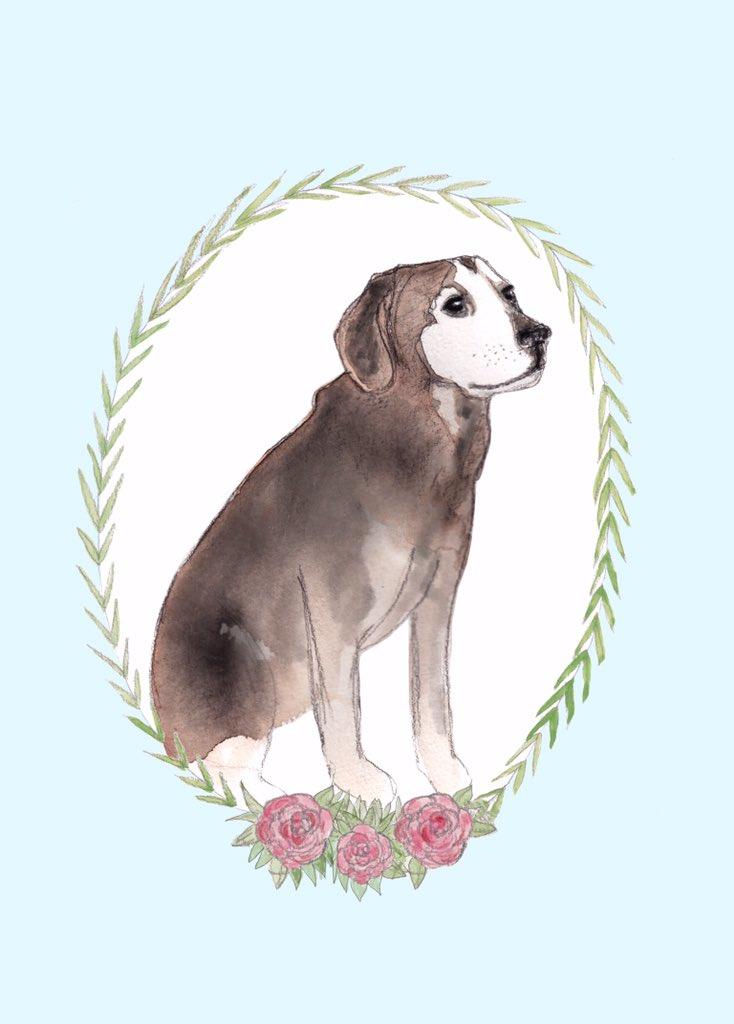 pet-portrait-beagle.jpg