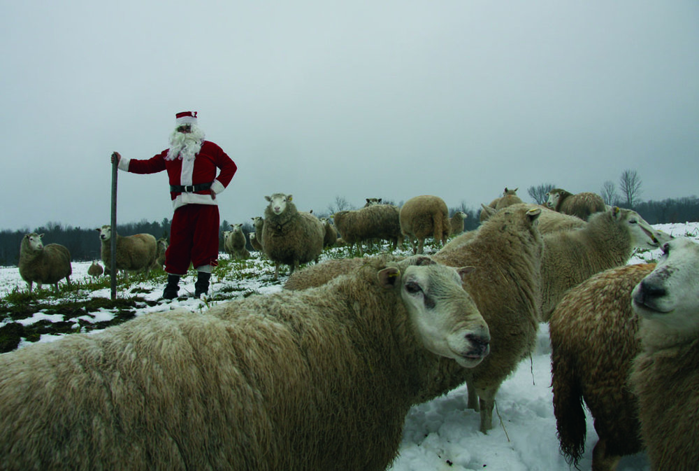 Le Père Noël garde ses moutons