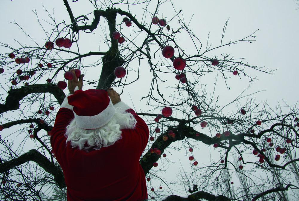 Le Père Noël cueille des pommes