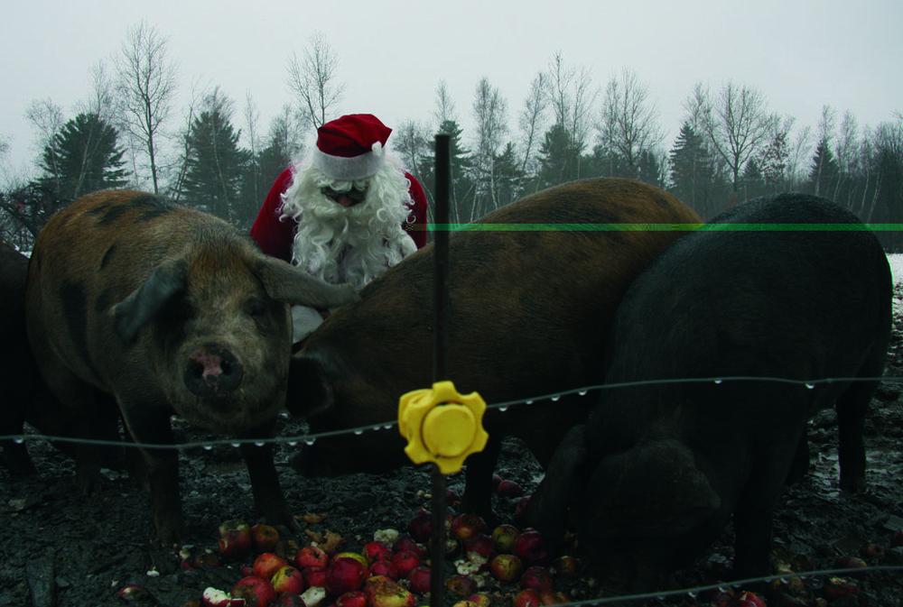 Le Père Noël surveille ses cochons