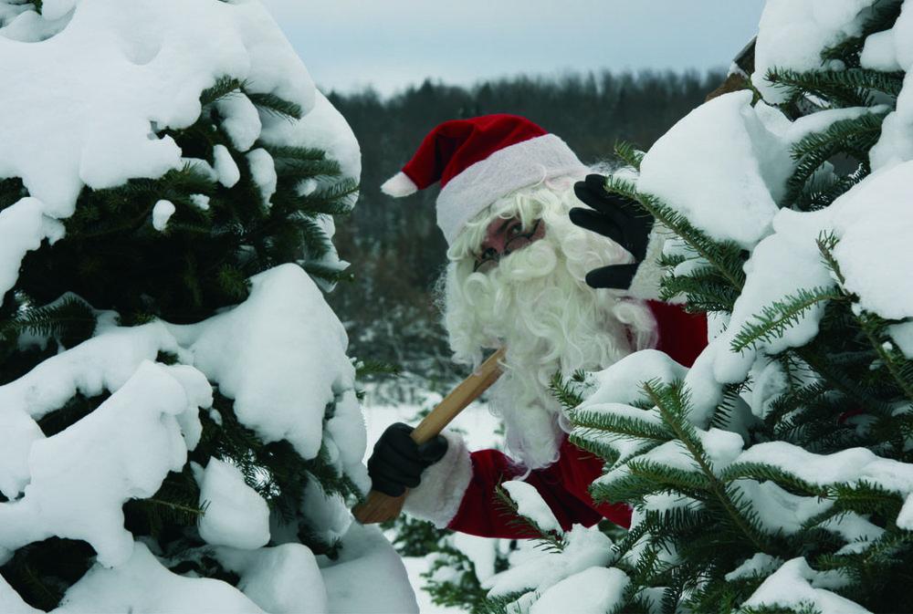 Le Père Noël coupe son sapin