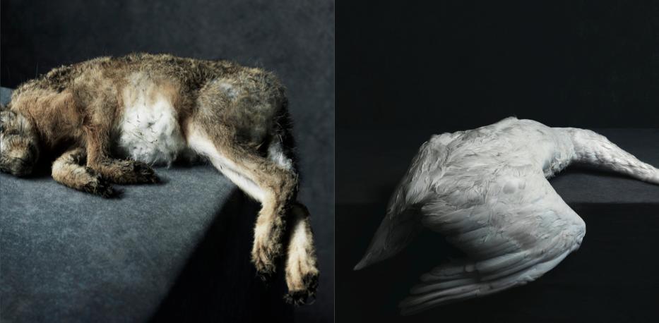 Artwork excerpt, images by Stephan Vanfleteran
