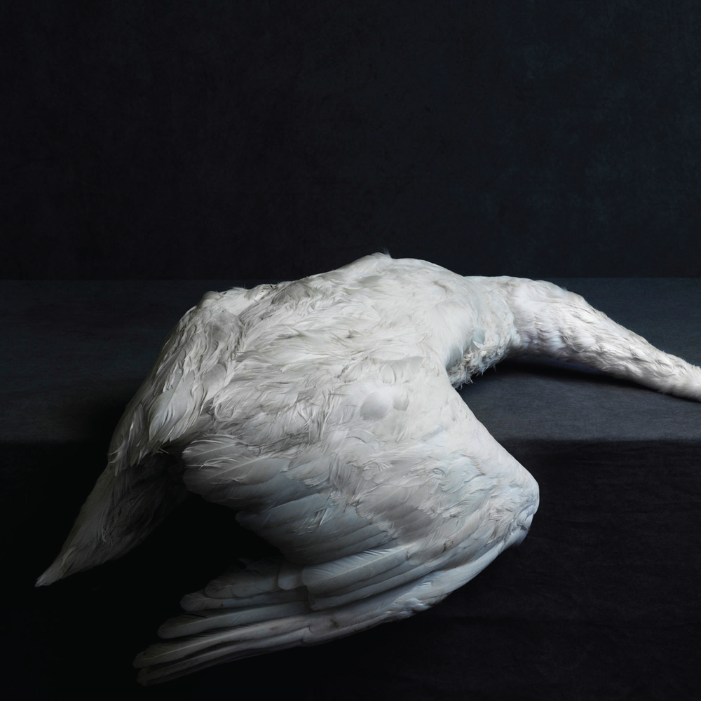 Cover art by Stephan Vanfleteran