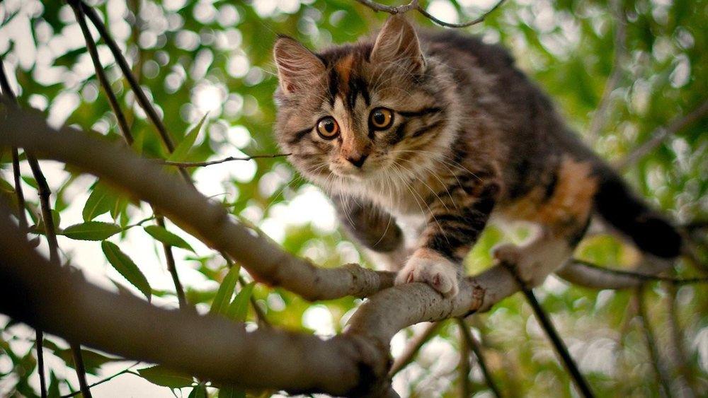 nature_cat-13264.jpg