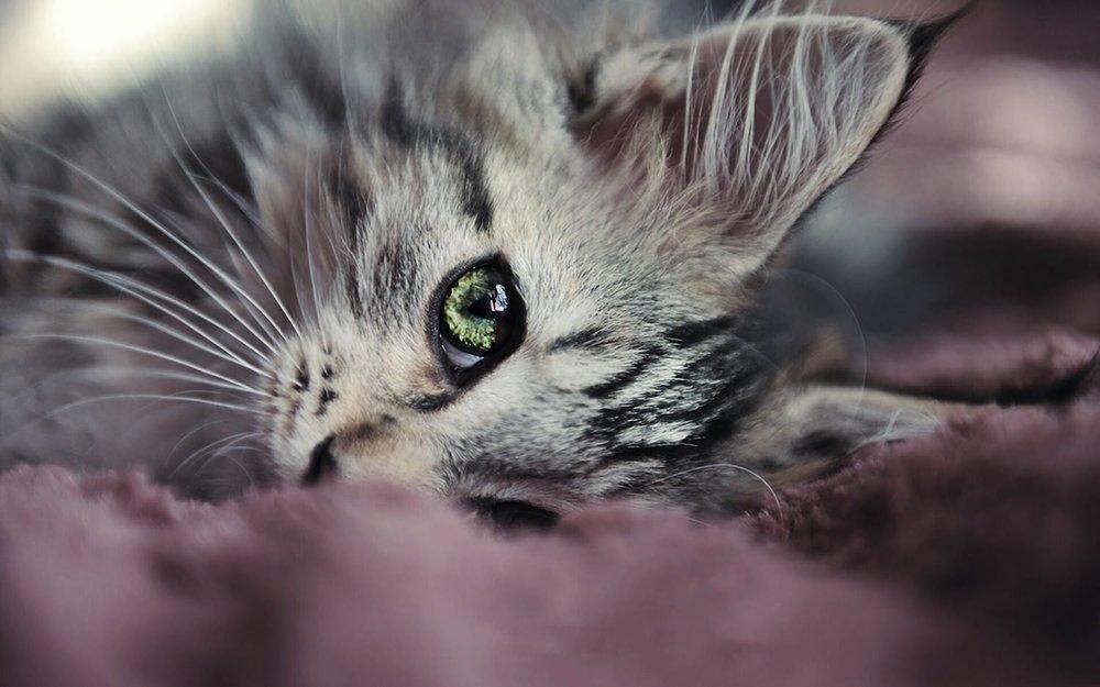 kattpårosapledd.jpg