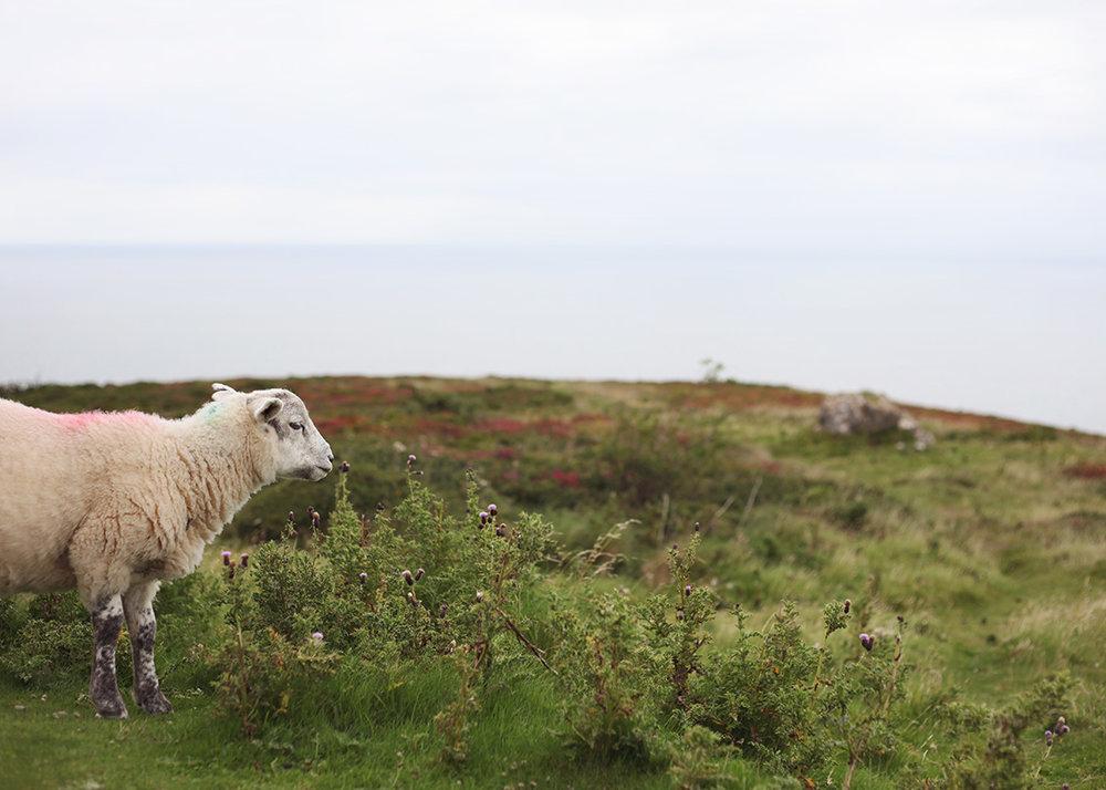 Wales8.jpg