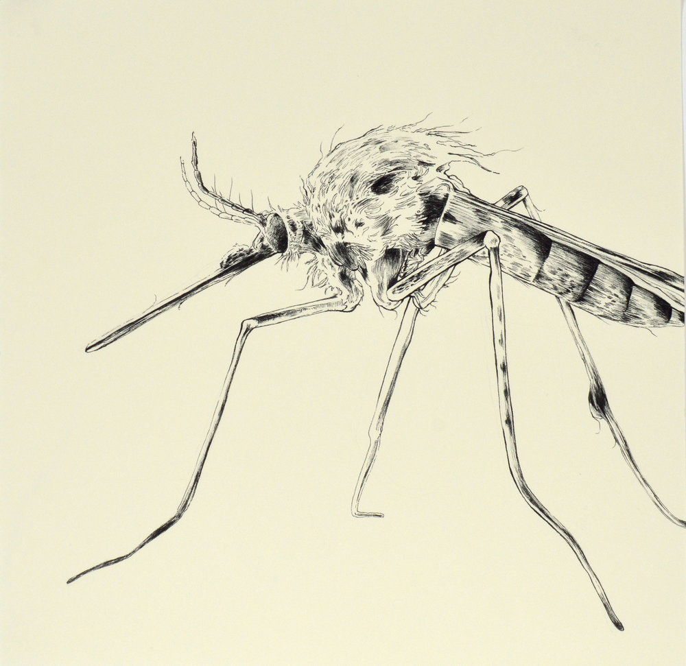"Mosquito 12x12"" Ink on Paper 2016"