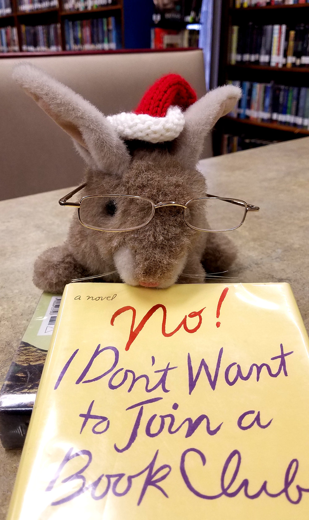 Dunkin the Library Bunny might not want to joint a book club, but you should!
