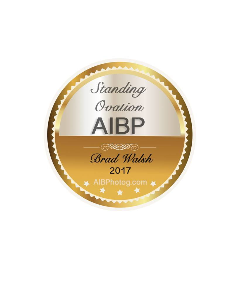 AIBP Standing Ovation Award Seal 2017.jpg