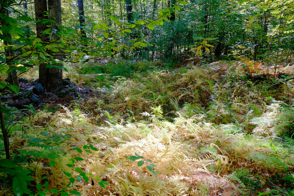 Maine: Cedar Brook Burial Ground