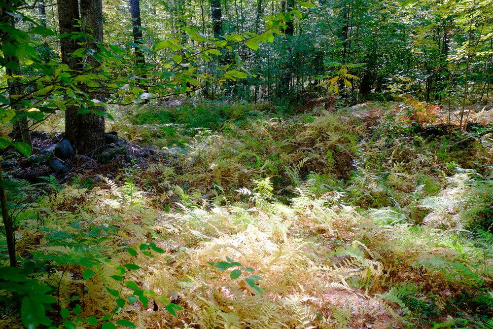 Maine: Cedar Brook Burial Ground