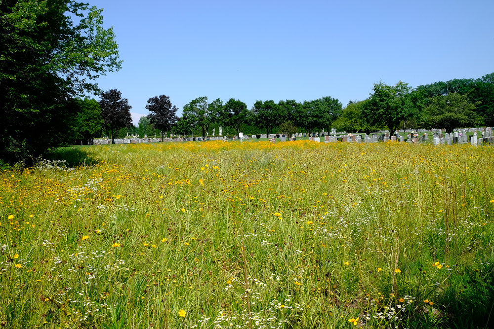 St. Michael's Meadow. At Calvary Cemetery natural graves are part of the meadow landscape, with conventional sections in the distance.