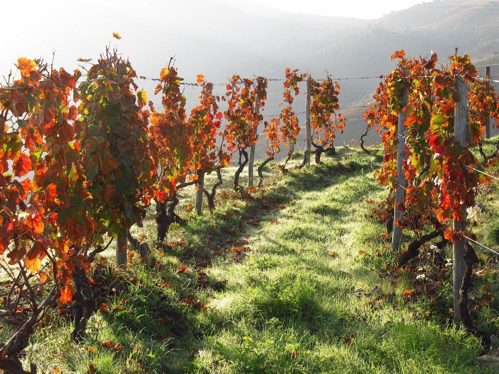 Portal wines - Quinta de Porrais