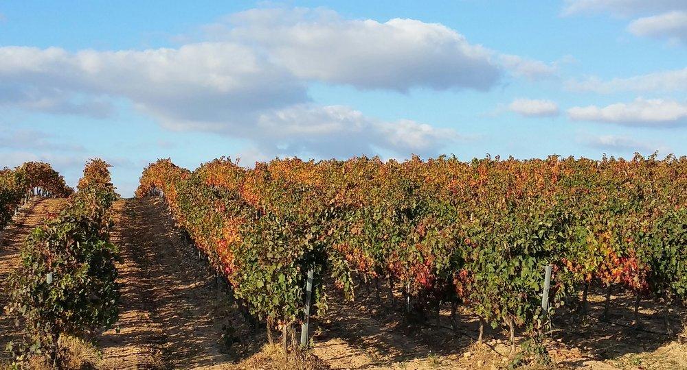 Portal wines