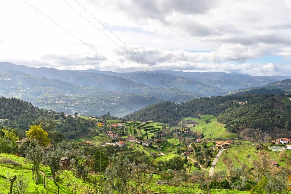 Portal wines - Quinta da Covella
