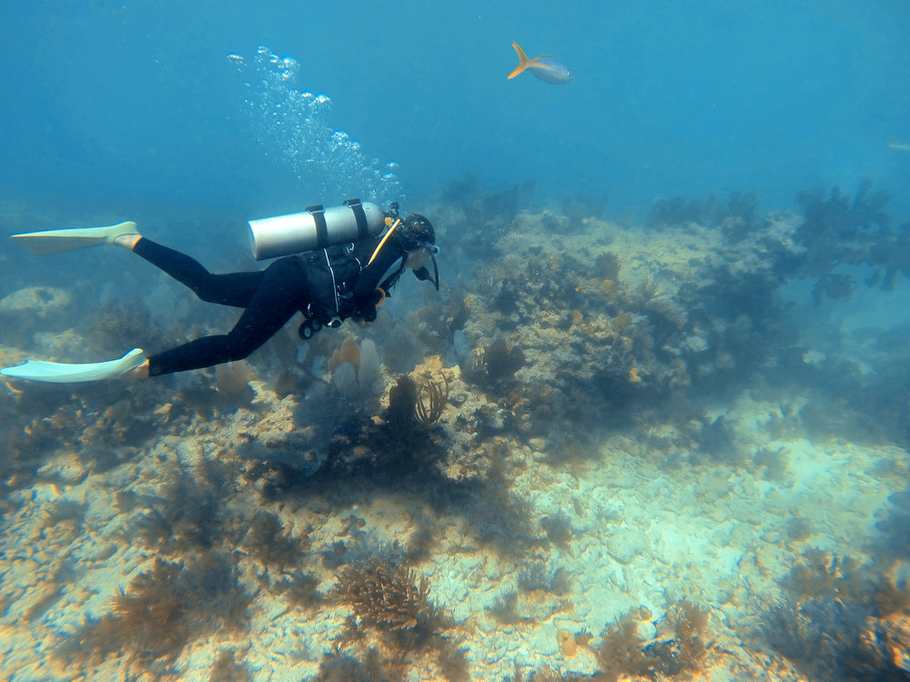 Alex swimming along the colorful Molasses Reef at John Pennekamp