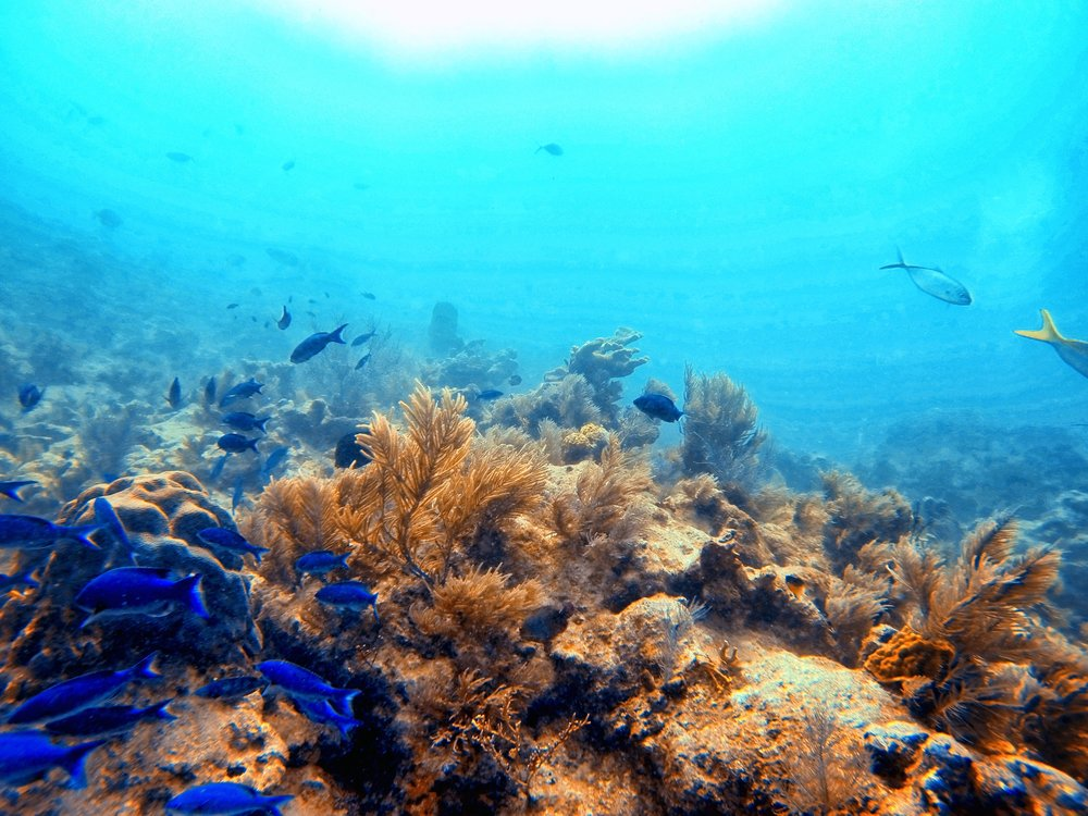 Great visibility for 50+ feet at John Pennekamp, Key Largo