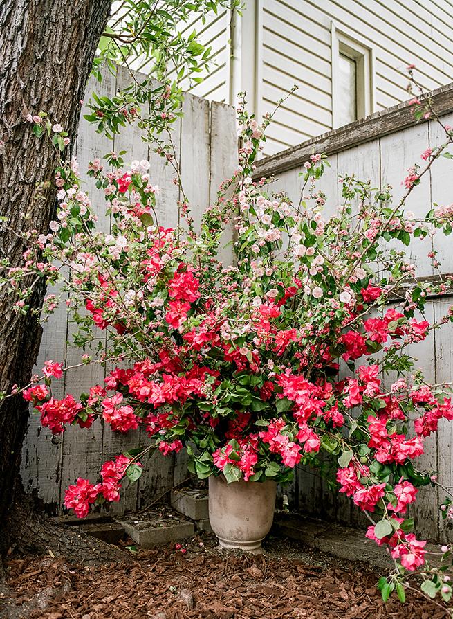 bougainvillea-floral-centerpiece.jpg