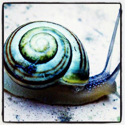 snailmain