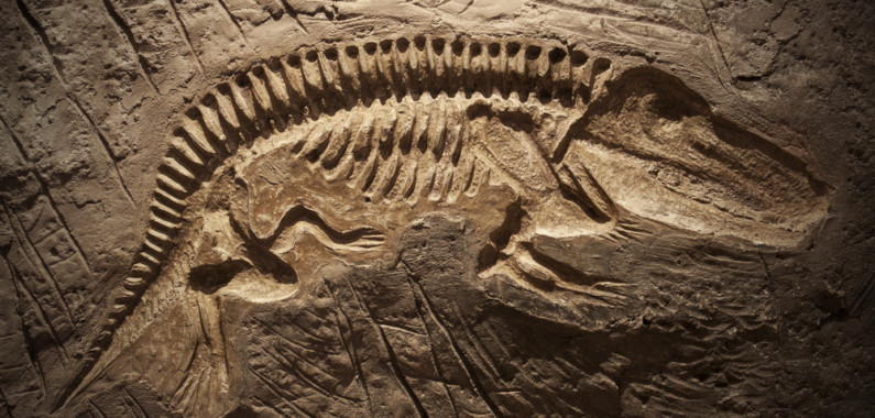 Radiometric dating isotope found dinosaur fossils