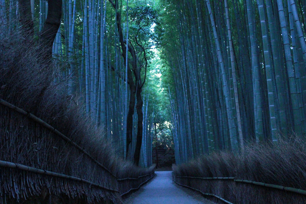 Early Morning Arashiyama Bamboo Grove.jpg