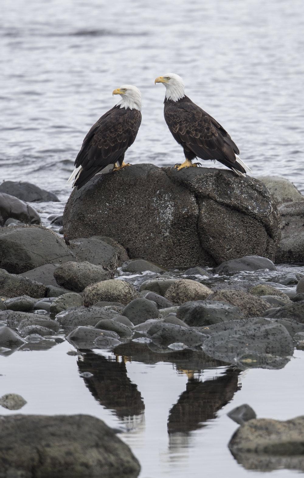 Eagles (1 of 1).jpg