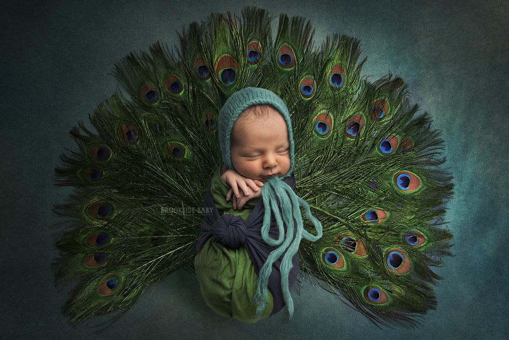 peacock composite web.jpg