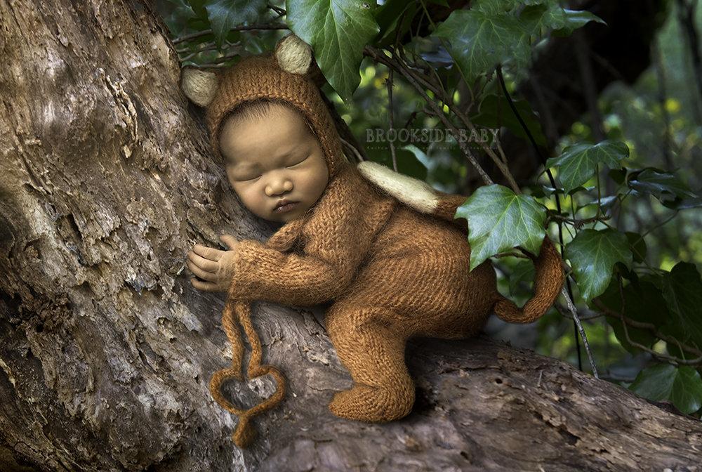 tree hugger web.jpg