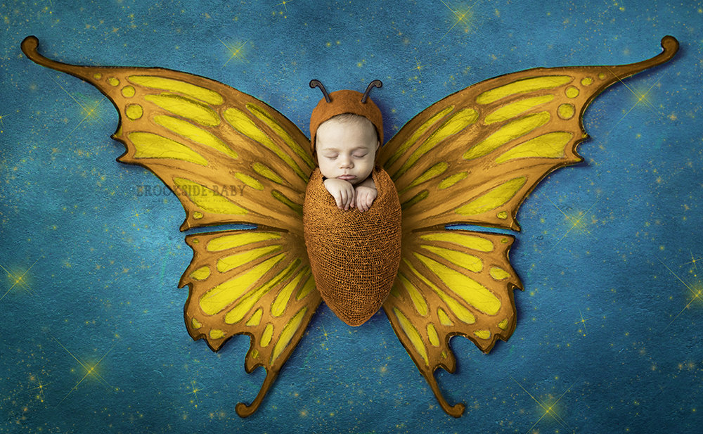 butterfly composite fb.jpg