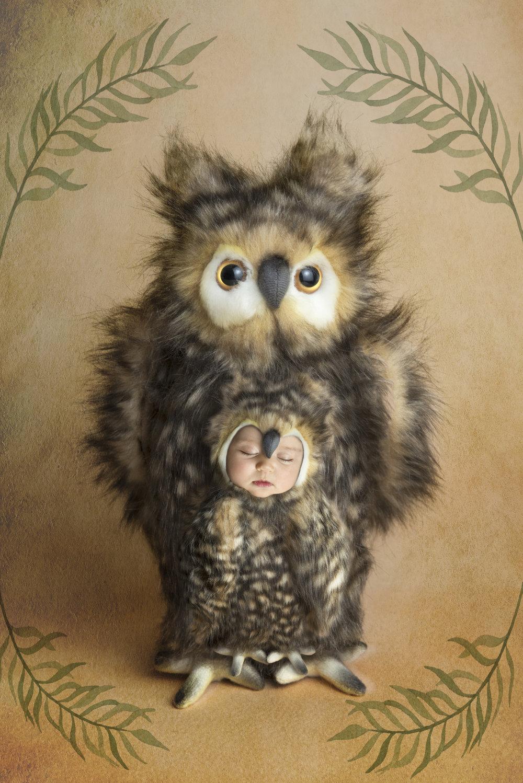 owl baby composite sleeping.jpg