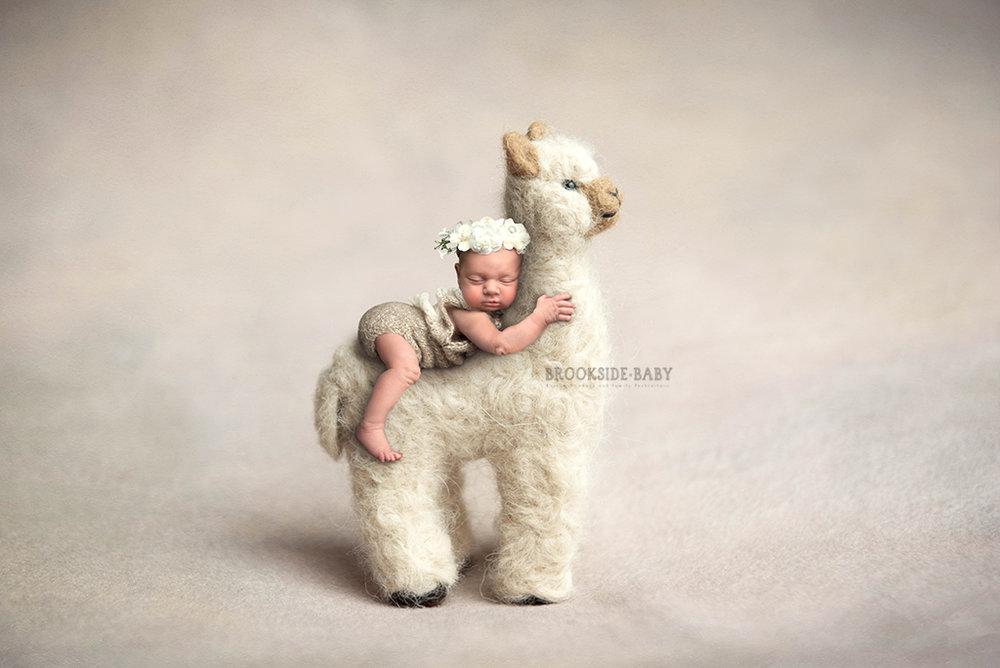 Madelyn Jones Newborn-101 web.jpg