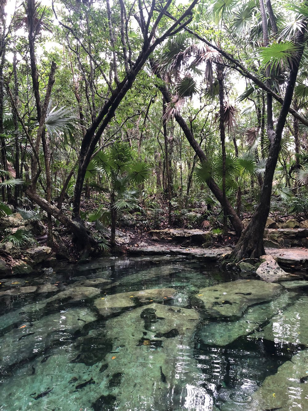 Cenote Azul is a great place to swim in the Yucatan. It's between Tulum and Playa del Carmen.