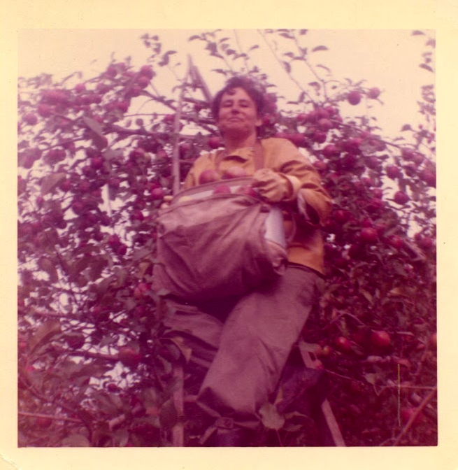 My grandmother, Guadalupe Ochoa, picking in the Michigan fields