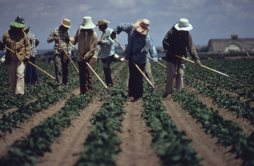 Calor App farm worker safety from the heat