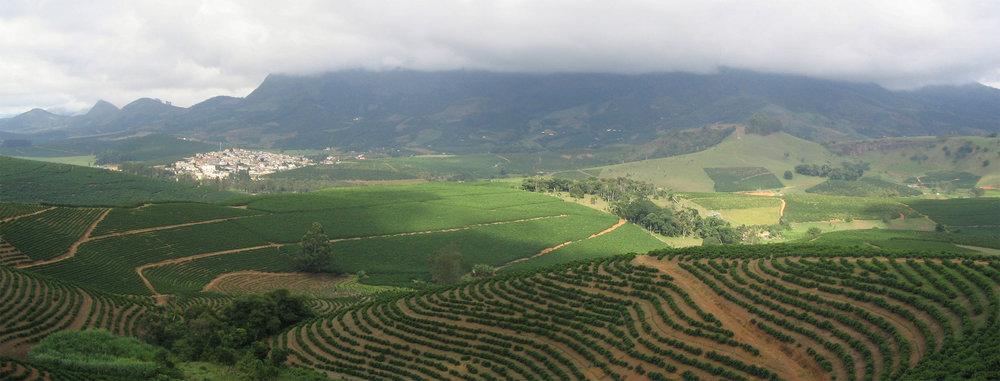 Een 'sun grown' koffieplantage in Brazilië