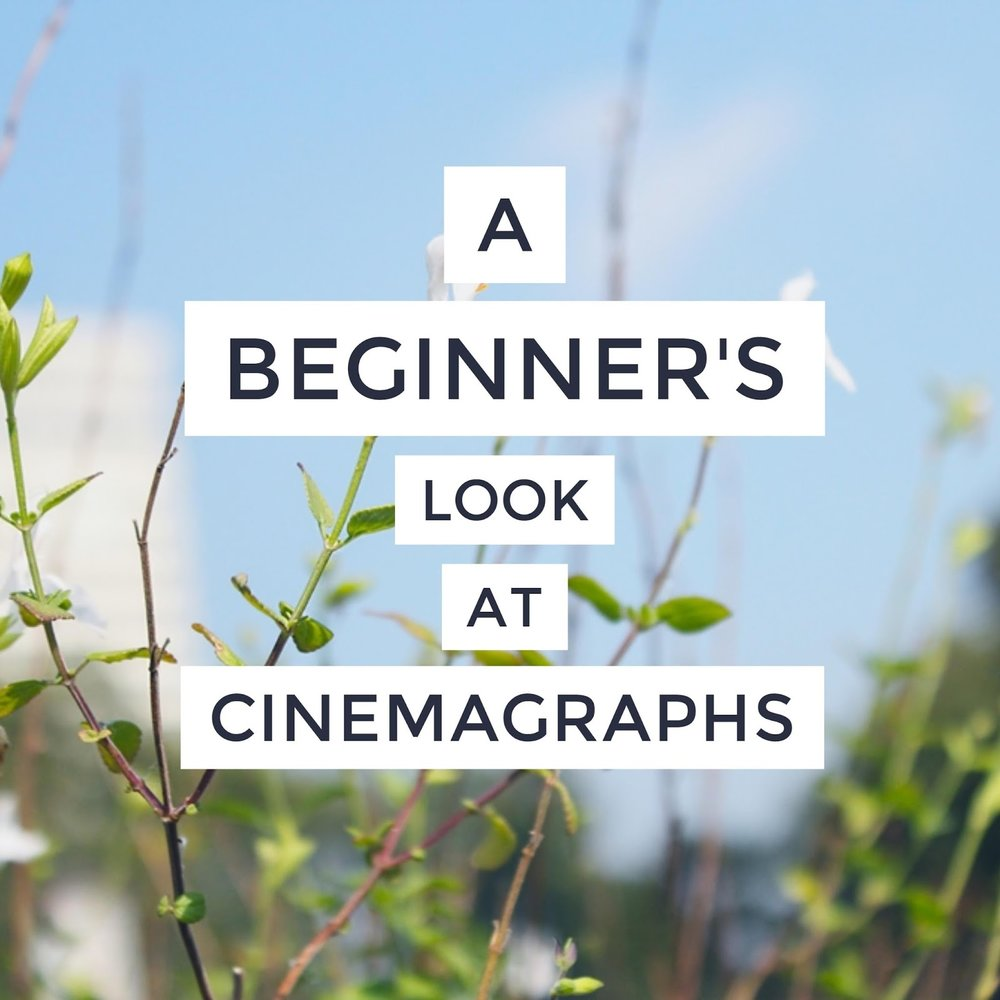 beginner cinemagraph photoshop phlearn examples