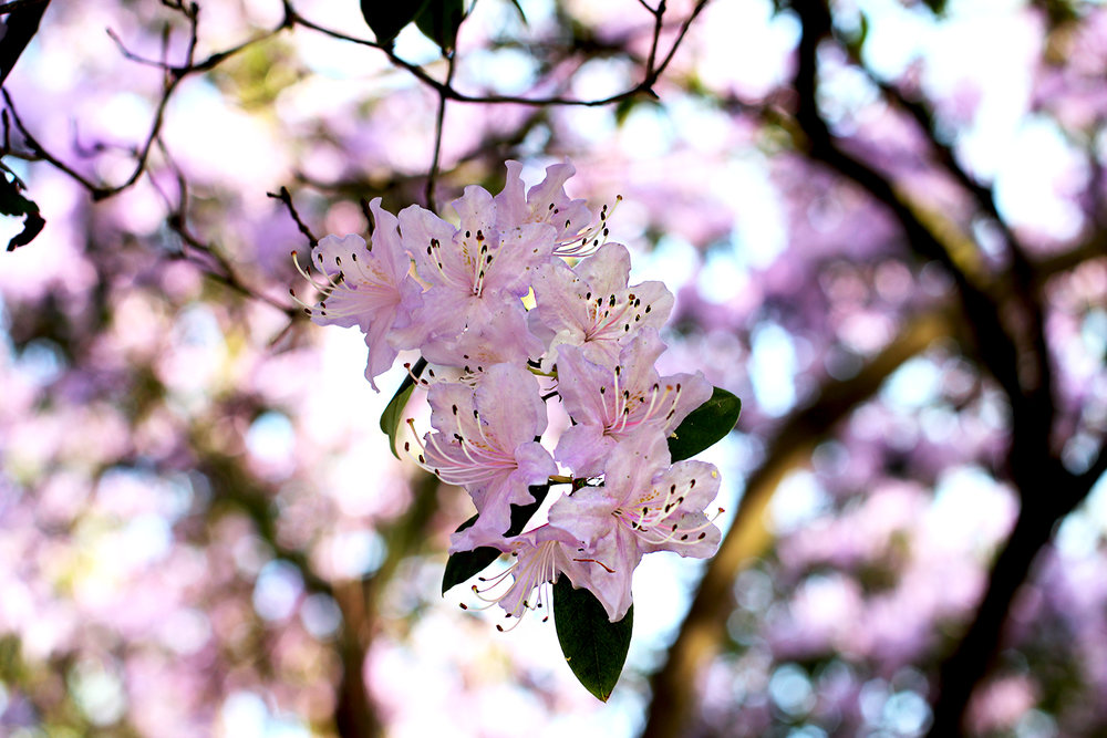 pinkpetals.jpg