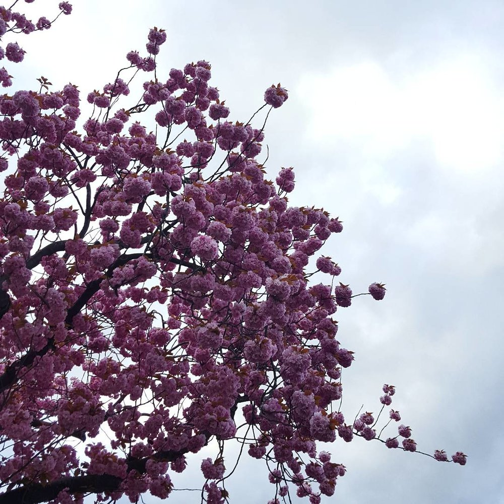 moody blossom trees spring