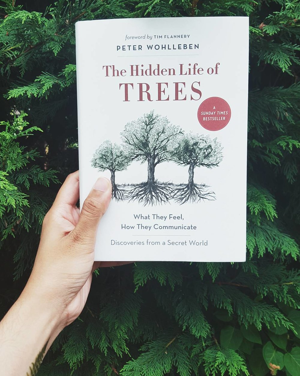 hidden life of trees peter wohlleben summer reading