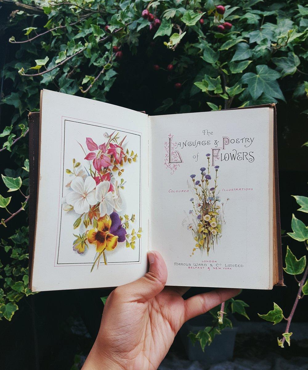 the language of flowers botanical books