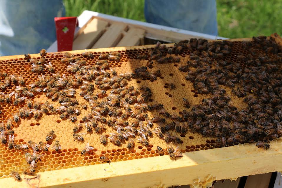 bees11.jpg