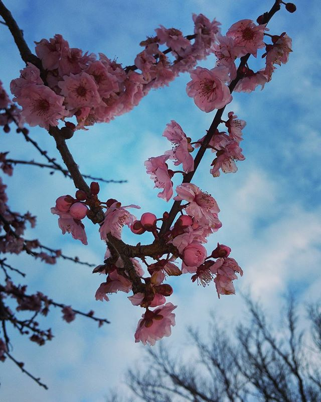 Springtime's almost here in Marin, and that means cherry blossoms.. and home selling!
