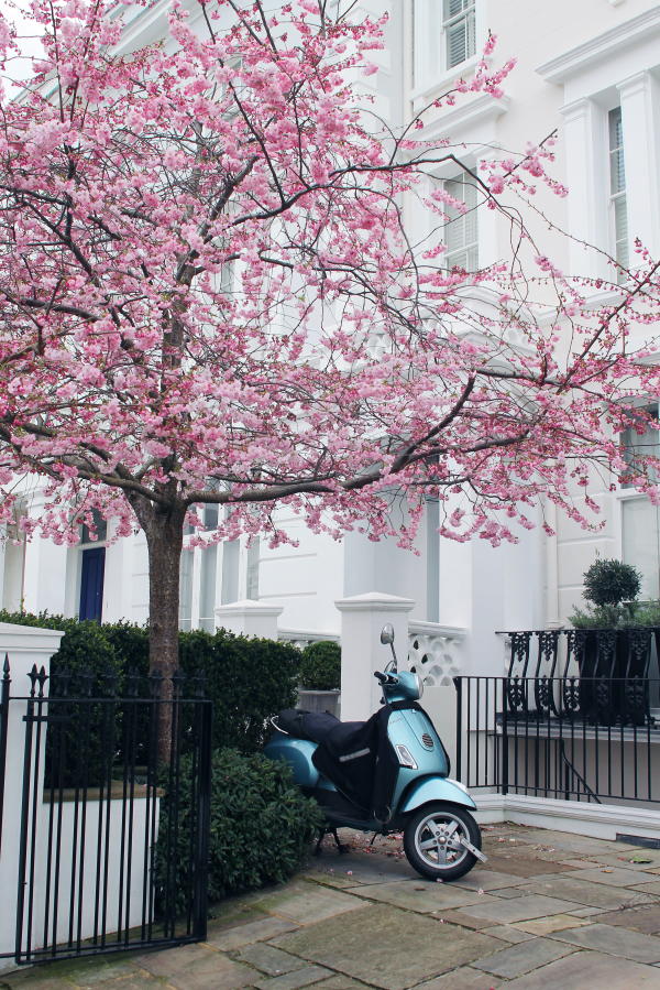 blue-vespa-notting-hill-cherry-blossom-tree-600x899