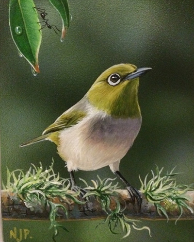 Silvereye - by Natalie Jane Parker - each of her paintings has a little ant hiding in the composition