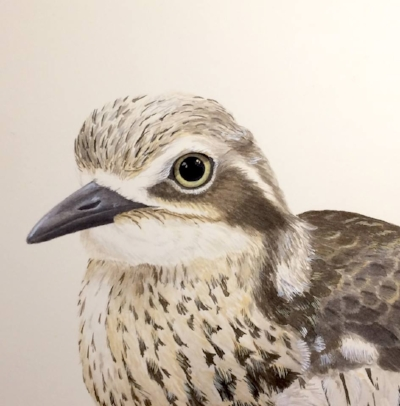 Bush-stone curlew painting completed in November