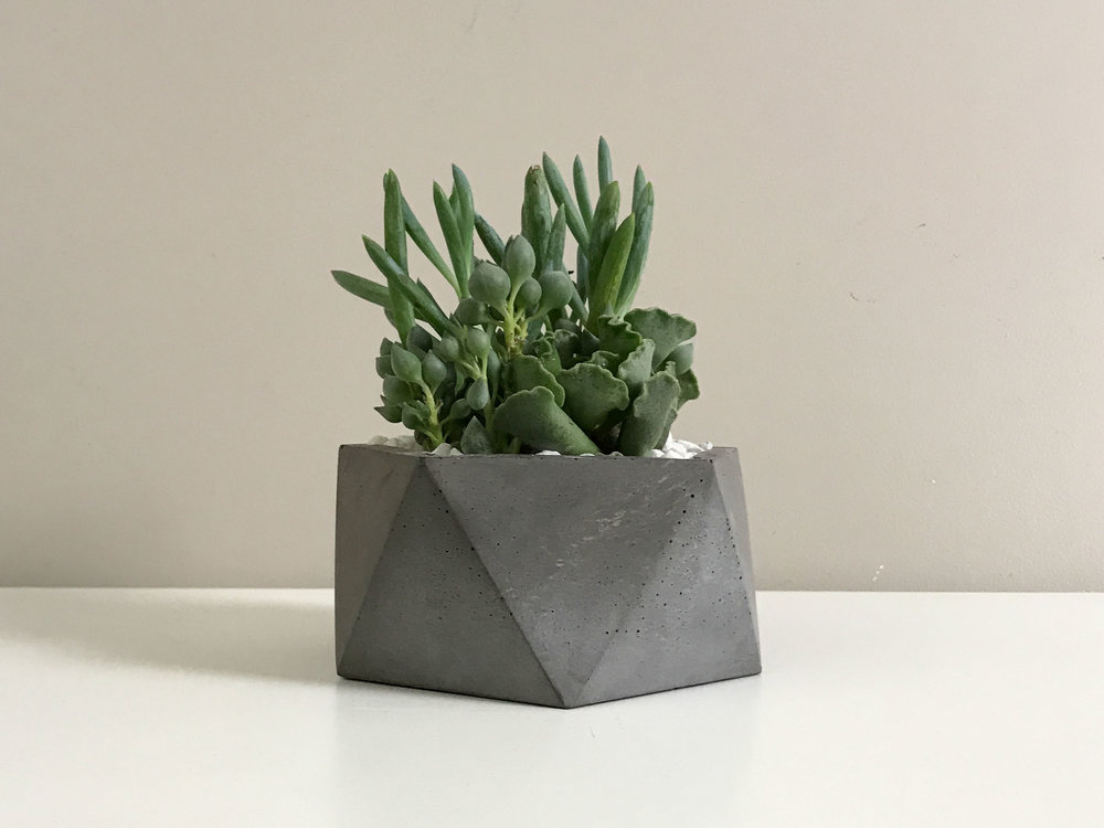 Dark Gray Charcoal Concrete Succulent Planter Pot by The Savvy Heart